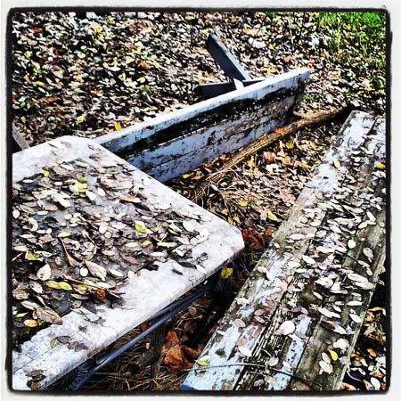 Høsten går mot slutten i Pats hage