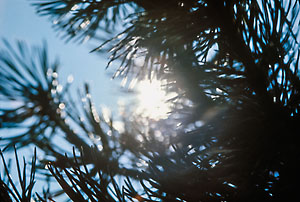 My first picture capture with Agfa CT18 - in 1973.