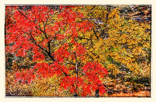 Høsten har slått inn med fulle farger i Stordalen