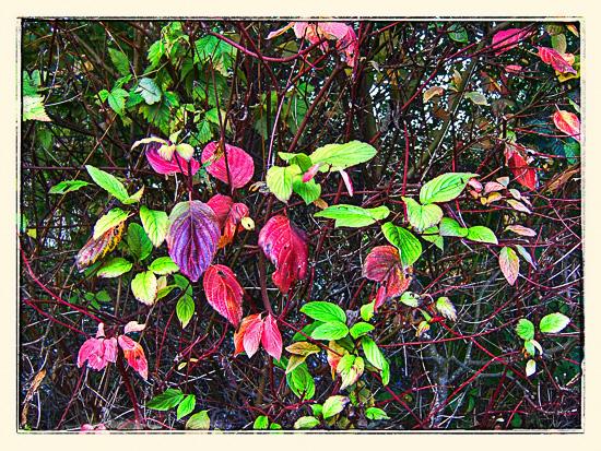 Høsten har kommet til Discovery Park