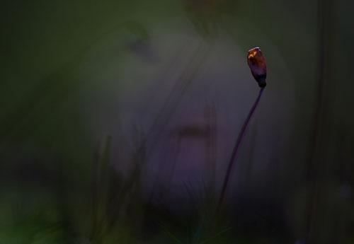 © Kristina Eriksson