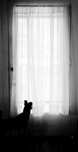 © Meg Greene Malvasi