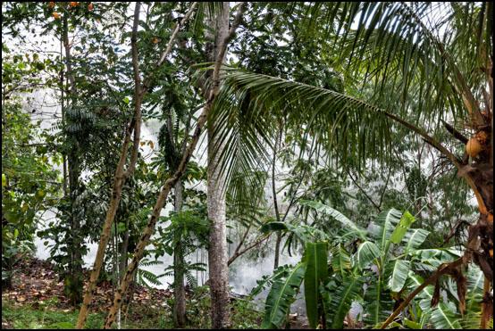Den tette regnskogen rundt Rio Caliente