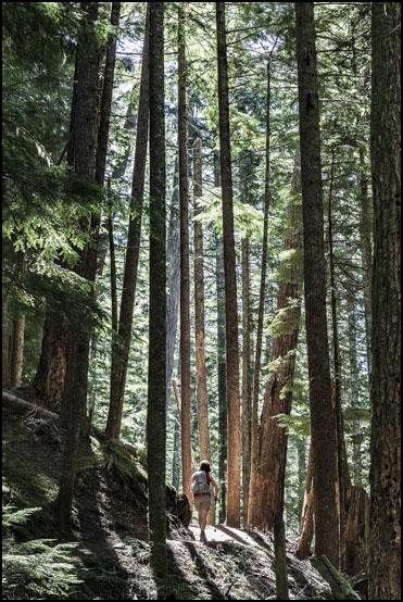 På vei gjennom den høyreiste skogen i lavere deler av Mount Dickerman